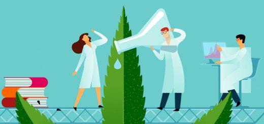 Whole Plant E-liquid CBD